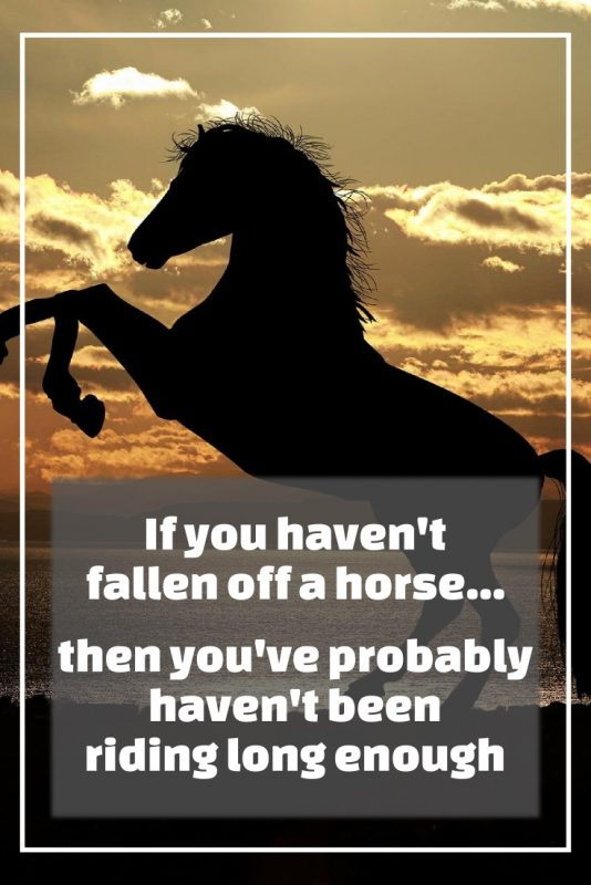 Quote: If you havent fallen off a horse... then you've probably haven't been riding enough